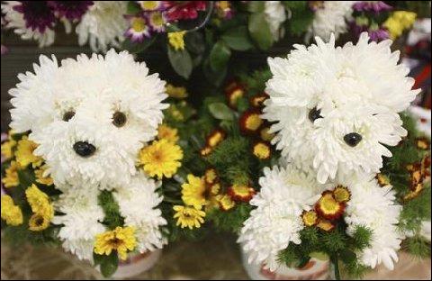 Compositions florales en forme de chien. Flower_dogs